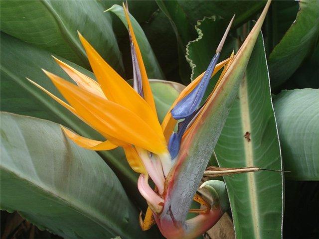 Королевские Ботанические Сады Сиднея - Австралия - Парки и сады мира - Каталог статей - Наши цветы