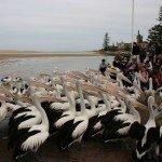 Новый Южный Уэльс фото