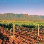 Винодельческая долина Hunter Valley